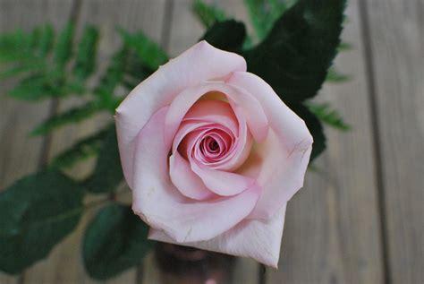 significato colori fiori significato colori fiori di maggio