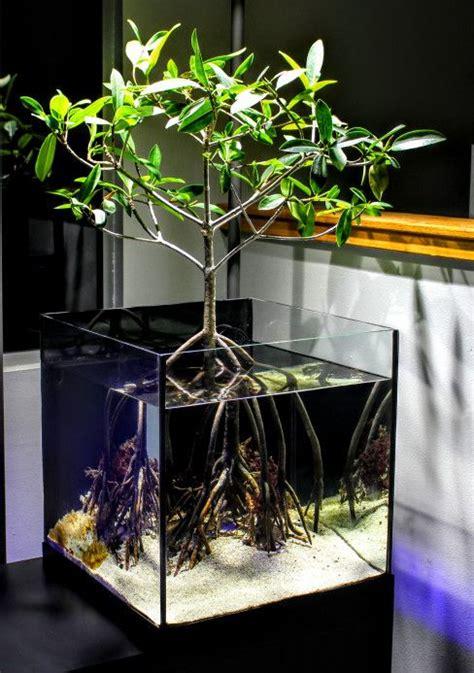 mangrove saltwater aquarium aquarium aquarium design