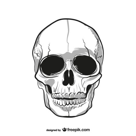Decorated Skull Human Skull Drawing Vector Free Download