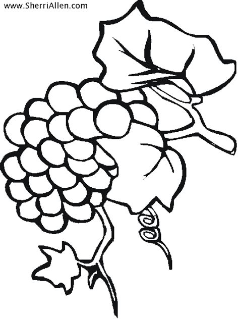 grapes coloring pages printable amazing coloring pages grapes printable coloring pages