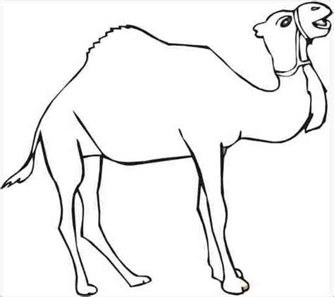 camel template camel pictures to print cliparts co