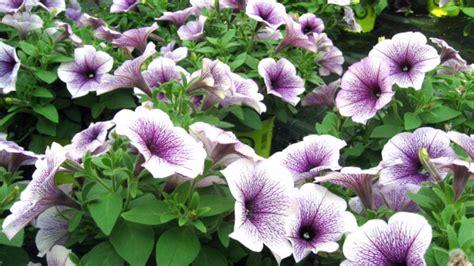 fiori stagionali piante stagionali vivaio monverde la cappelletta mo