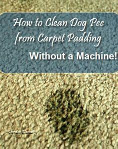shoo rug without machine 1000 ideas about stains on how to remove urine stains and stains