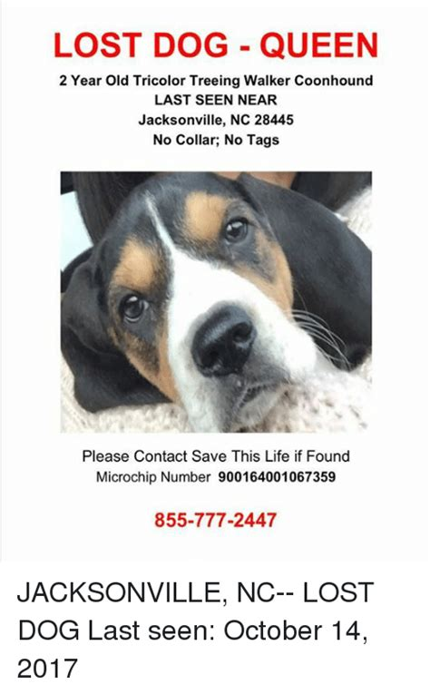 Lost Dog Meme - lost dog queen 2 year old tricolor treeing walker