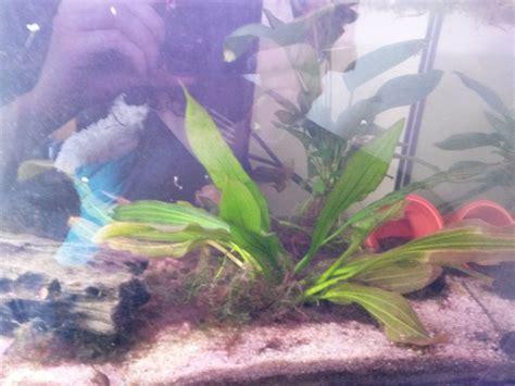 Comment Nettoyer Les Decors D Aquarium by Comment Nettoyer Le D 233 Pot Dans Mon Aquarium De 50l