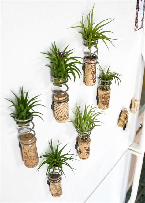 air plants 25 best ideas about air plants on pinterest hanging air