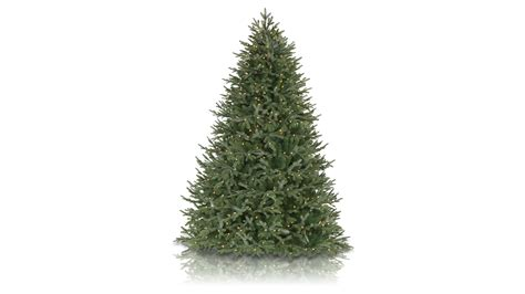 what type of christmas tree smells the best tree best real trees the independent tree what of smells fantastic