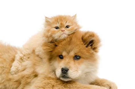 dogs with cats dogs and cats