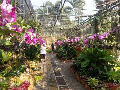 Thai Orchid Garden by 17 Best Images About Volendam Quot America Line Tour