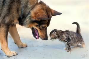 Diese babykatzen kuscheln auch mit hunden