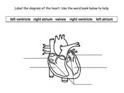 Cardiovascular System Worksheet Pdf