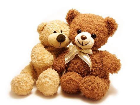 teddy looking teddy best animals