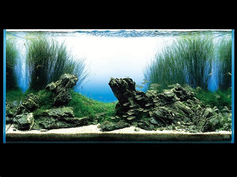 the violet fern aquascaping