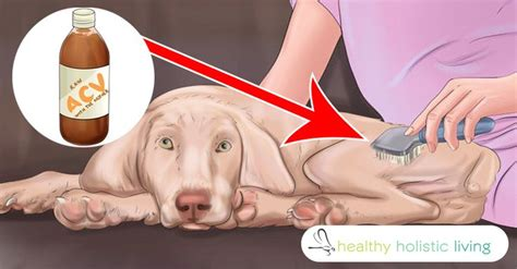 apple cider vinegar for fleas on dogs 423 best images about animals pets on cats and kittens