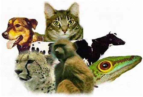 imagenes reino animal majsb marzo 2011