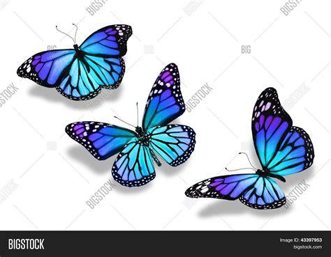 imagenes mariposas turquesas imagem e foto tr 234 s borboletas azuis turquesas bigstock