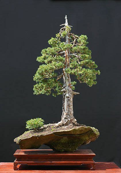 Indoor Bonsai Kaufen by 25 Best Ideas About Bonsai Baum On Lila B 228 Ume