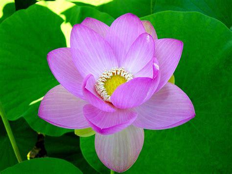 tutti i fiori mondo tutti i fiori mondo guerriero della luce fiori