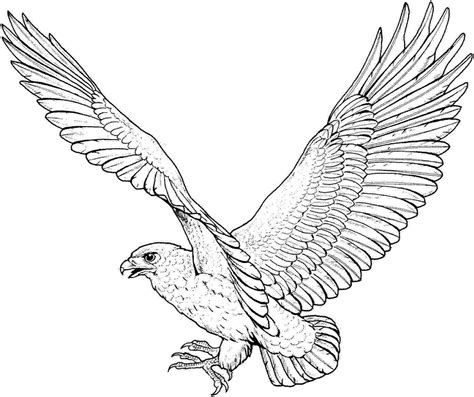 coloring pages of eagle free printable eagle coloring pages for kids