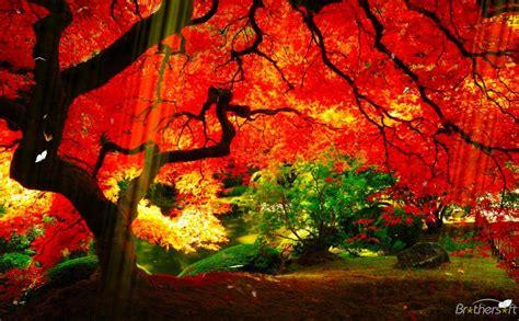 planet garden screensaver planet garden