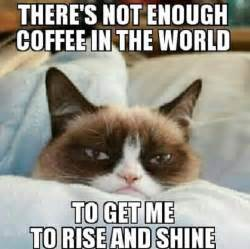 Open The Eyes Of My Heart Blind Boy 1000 Images About Grumpy Cat Memes P On Pinterest