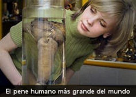 el pene mas corto del mundo culturizando el pene humano m 225 s grande de la historia