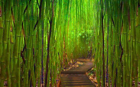 bamboo background 2027