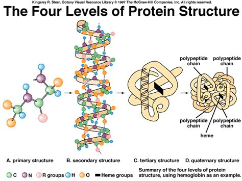 protein levels of structure corporalshervan experiences with biochemistry