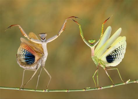 best photo of 2014 the best pictures from national geographic s photo contest