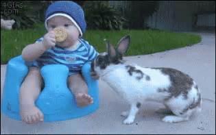 Bathroom Bunny Gif Baby Rabbit Gifs Find On Giphy