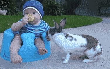 rabbit bathroom gif baby rabbit steal gifs find share on giphy