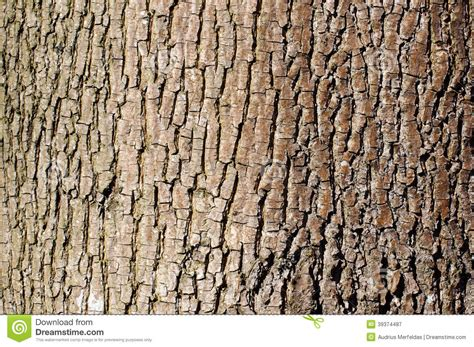 landscape pattern photography brown tree bark texture in landscape orientation stock