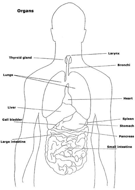 organ locations diagram location of major organs in human anatomy organ