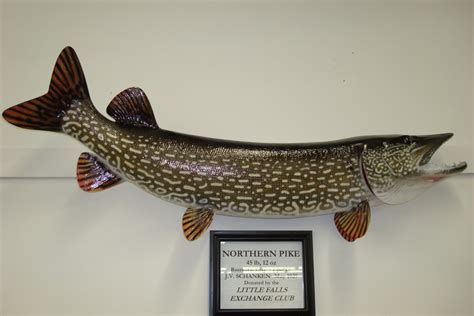 Mn Records Fishing Museum Gallery Gift Shop Mn Fishing Artifacts Fishing Boats Record Fish