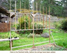 How To Build Trellis by How To Make A Trellis Apps Directories