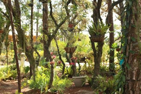 Psl Botanical Gardens Creative Gardening Picture Of Port St Botanical Gardens Port Tripadvisor