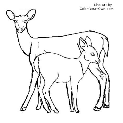 doe deer coloring pages white tail deer doe and fawn coloring page