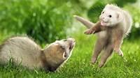 Best Top Desktop Animals Wallpapers Hd Animal Wallpaper Picture Image