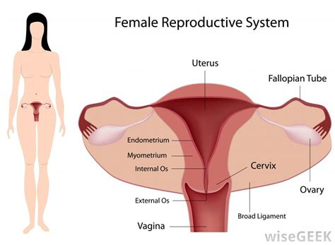 first period after c section and tubal what is a posterior cervix with pictures