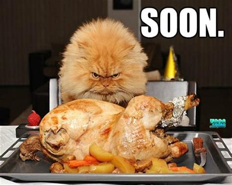 eats turkey soon cat eats turkey dump a day