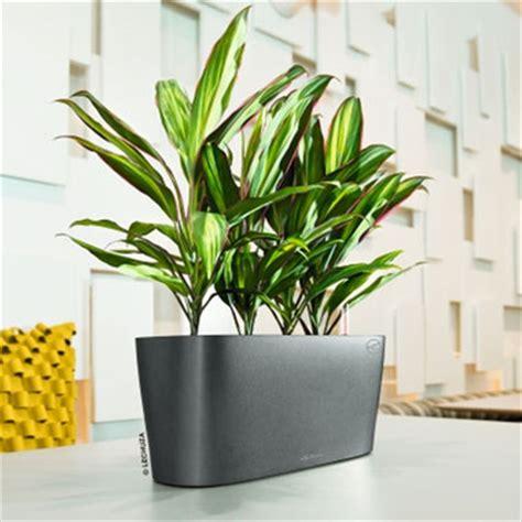 Lechuza Planters Australia indoor plant hire melbourne indoor plants interior