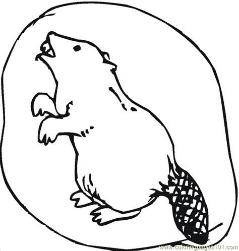 beaver color beaver 6 coloring page coloring page free beaver