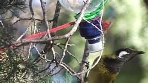 how to make nectar feeder for honeyeater birds youtube