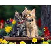 Kumpulan Wallpaper Kucing Lucu  Planet Wallpapers