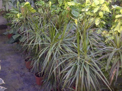 piante pendenti da interno piante pendenti da interno jpeg kb le piante grasse da