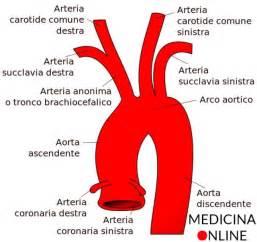 arteria carotide interna carotide comune interna esterna dove si trova ed a che