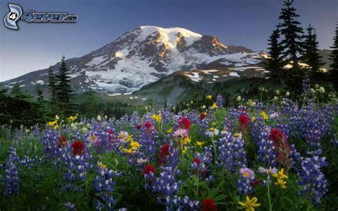 fiori colorati immagini fiori colorati