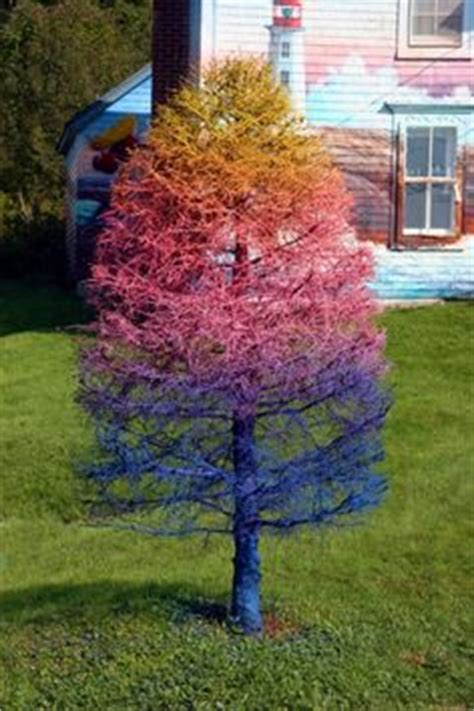 spray paint tree 1000 images about spray paint dead tree on