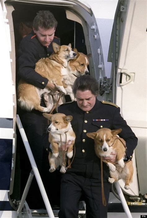 the queens corgis official corgi wranglers for the queen dogs pinterest