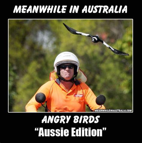 Funny Australia Day Memes - best 25 meanwhile in australia ideas on pinterest